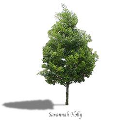 Savannah holly mtv trees